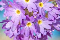flower 's 4