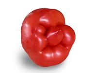 Senior Tomato