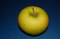 Granny Smith Green Apple on Dark Stock Photos 4