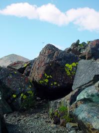 lichen moss and rocks 4