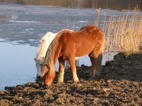 Hästbilder Gratis