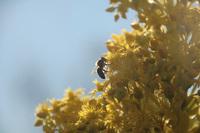 bee on a flower in winter