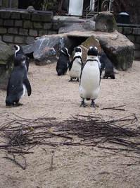 penguin in zoo 2