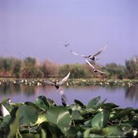 Danube Delta - 4