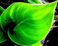 macro leaf #2