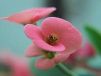 Macro: Flower