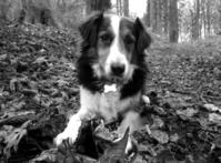 Murphy My Dog 1
