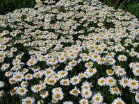 Beautiful Flowers 4