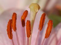 Flower with honey
