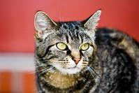 Willow Cat 2