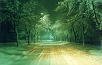 snow in street