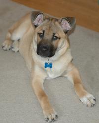 Bentley the Puppy