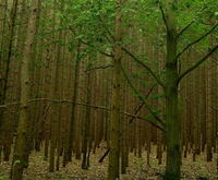 Michigan Forest 2