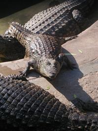 Lazy crocs