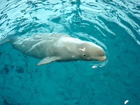 Sea Animals 7