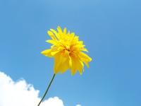 Blue Sky & Yellow Wildflower