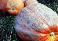 gourd 1