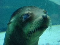 Underwater seal