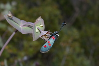 Butterfly strange