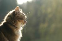 cat story 24