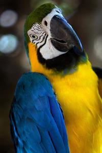 Curious Bird! 2