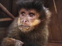mico carletto 1