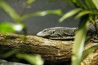 Tree Lizard 2