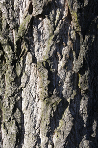 Bark 8