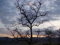 Sunset scenary from Corbatte National park, Dhikala, UA, India