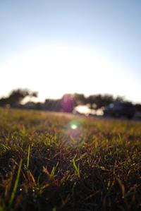 Grass Bocca 2