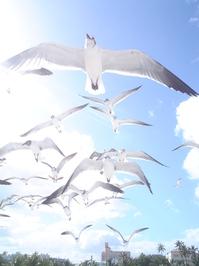 Miami Seagulls