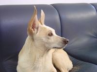 my dog1