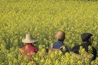 rapeseed farmers