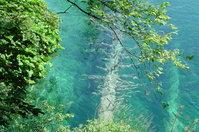 Tree under water