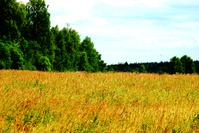 the Russian field