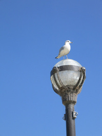 seagull on lamp