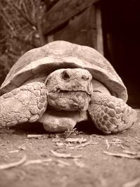 Turtle 5