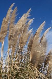 windy contrast 2
