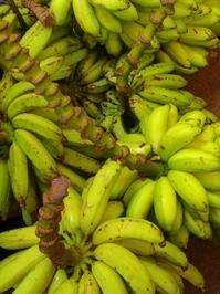 Banana Prata 3