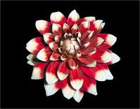 Super Flower