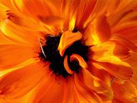 Macro Summer Flower