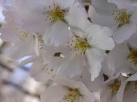 White Bliss 8