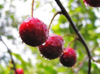 Cherry x3