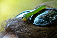 A snake on a head