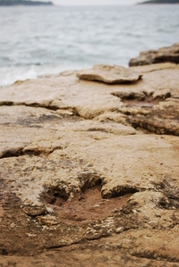 Dinosaurus step
