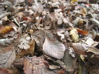 Rush of leaves