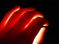 the best hand end light