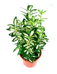 vase with plant 5