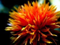 flower ./ 10