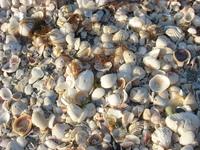 Da Shells